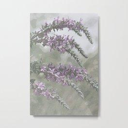 Purple loosestrife Metal Print