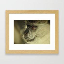 Monkey See Framed Art Print