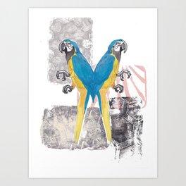 Siamese Macaw Art Print