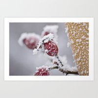 Rosehips in the Snow Art Print