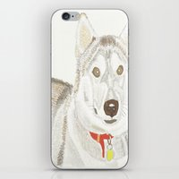 husky iPhone & iPod Skins featuring Husky by Lee Watson
