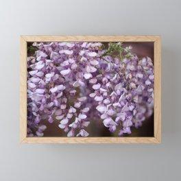 Spring - Wisteria Framed Mini Art Print