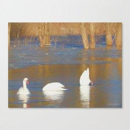 Swans see, hear & speak no evil Canvas Print