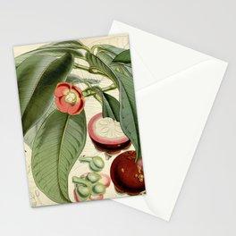 Flower 4847 garcinia mangostana Mangosteen or Mangostan1 Stationery Cards