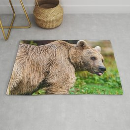 Magnificent Grown Grizzly Bear On Green Meadow With Cute Look On His Face Close Up Ultra HD Rug