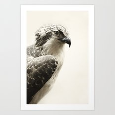 Hawk | Fig .03 Art Print