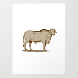 Brahman Bull Drawing Art Print