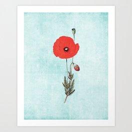 Vintage Red Poppy Art Print