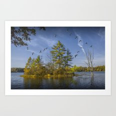 Canada Geese flying by a Small Island on Hall Lake in Autumn at the Yankee Springs Recreation Area N Art Print