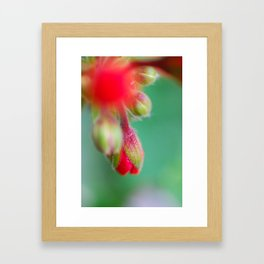 Red Bud Framed Art Print