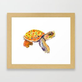 Orange Baby Turtle Framed Art Print