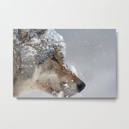 Snow Wolf Face Metal Print