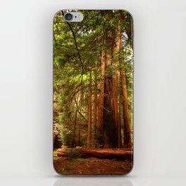 Muir Woods Walkway iPhone Skin