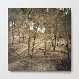 Forest BW 01 Metal Print