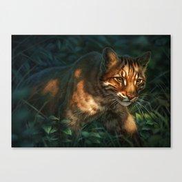 Golden Cat Canvas Print