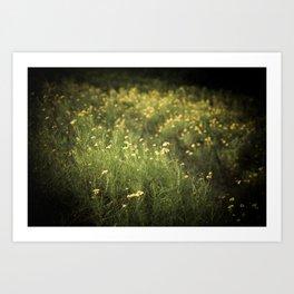 field of yellow flowers. Art Print