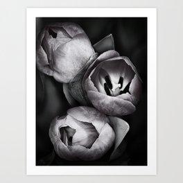 Black and White Tulips Art Print