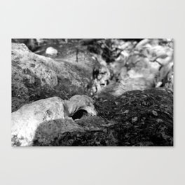 Nature in Abstract Canvas Print