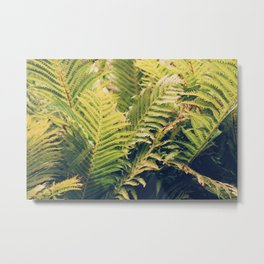 Botanical Garden Ferns Metal Print