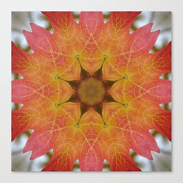 Sugar maple mandala 1 Canvas Print