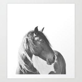 Stallion in black and white Art Print