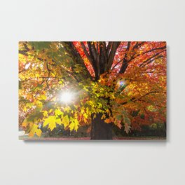 Fall Foliage - Chester, Virginia Metal Print