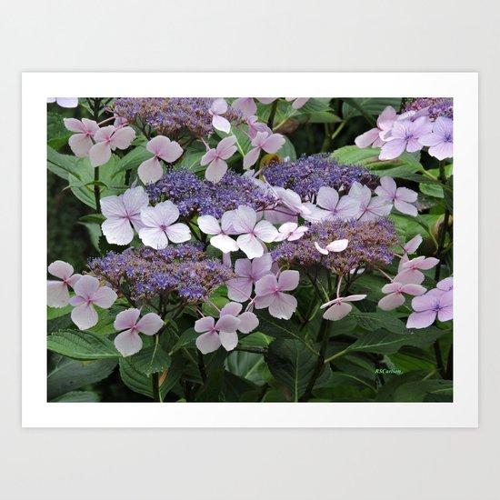 Hydrangea Violet Hues Art Print