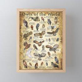 Owls of the World Framed Mini Art Print
