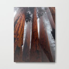 Misty Foggy Minimalist Landscape Photography Tall Redwood Trees Metal Print