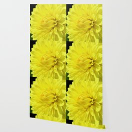 Glowing Yellow Dahlia Wallpaper