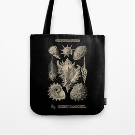 """""""Prosobranchia"""" from """"Art Forms of Nature"""" by Ernst Haeckel Tote Bag"""