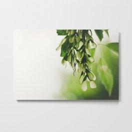 Tilia Metal Print