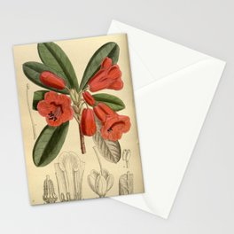 Rhododendron dichroanthum, Ericaceae Stationery Cards