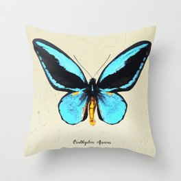 Butterfly01_Ornithoptera  Aesacus Throw Pillow