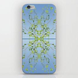 Birch on blue iPhone Skin