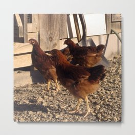 Chicken Fleet Metal Print