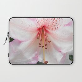 Light pink azalea or rhododendron flower. floral botanical garden photography. Laptop Sleeve