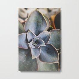 beautiful succulent Metal Print