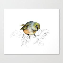 Sylvereye - Waxeye bird Canvas Print
