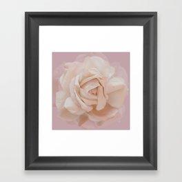 DUSKY ROSE Framed Art Print