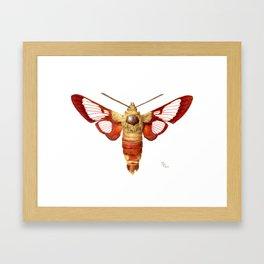 Hummingbird Clearwing Moth Framed Art Print