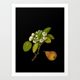 Pyrus Communis Mary Delany Vintage Botanical Floral Collage Delicate Paper Flowers Art Print