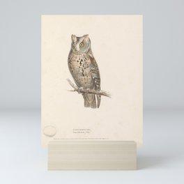 Scops-Eared Owl, scops aldrovandi5 Mini Art Print
