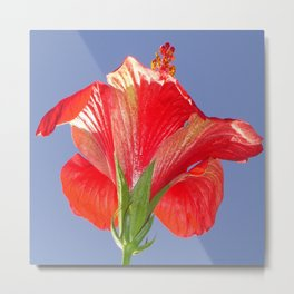 Side View of Scarlet Red Hibiscus In Bright Light Metal Print