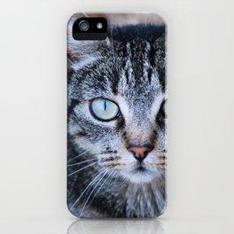 Tabby Cat  iPhone Case