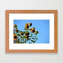 Sunflower Ciel  Framed Art Print
