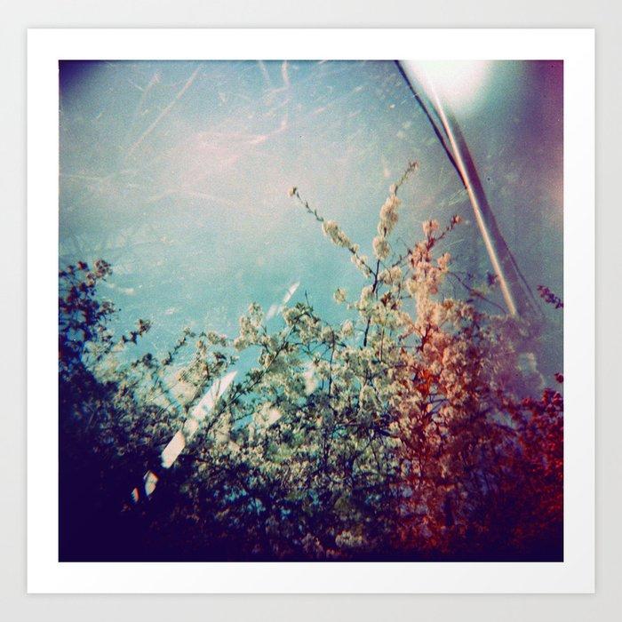 Holga Flowers III Art Print