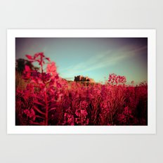 Early morning, Bamburgh castle Art Print