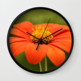 Mexican Sunflower in Bloom Wall Clock