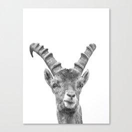 Black and white capricorn animal portrait Canvas Print